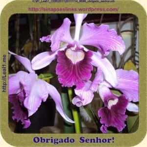 20111114_8686_obrigado_senhor