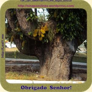 20111114_8754_obrigado_senhor