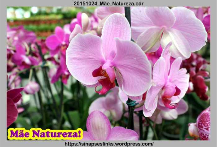 20151024_Mãe_Natureza