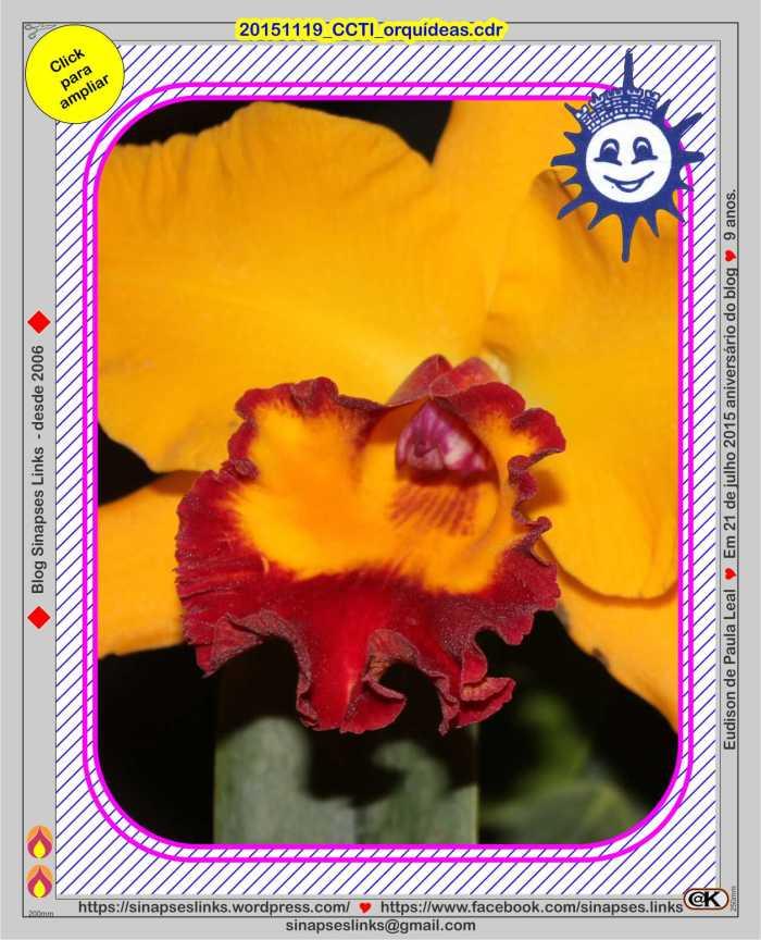 20151119_CCTI_orquídeas2