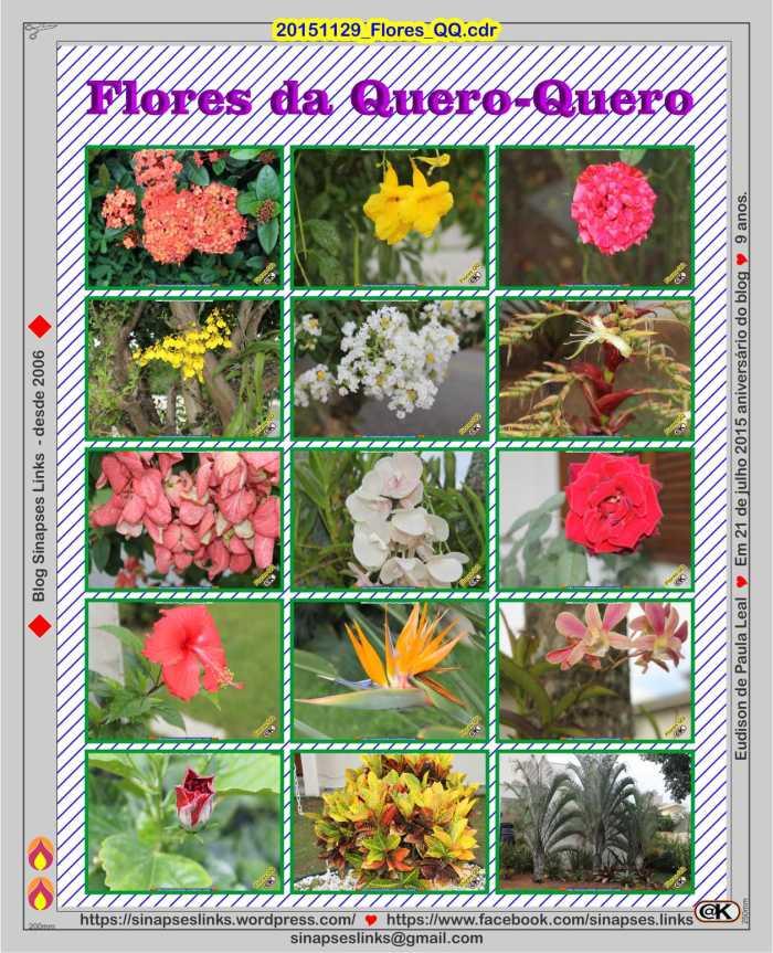 20151129_Flores_QQ